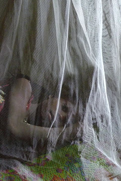 Child Sleeping Under Net